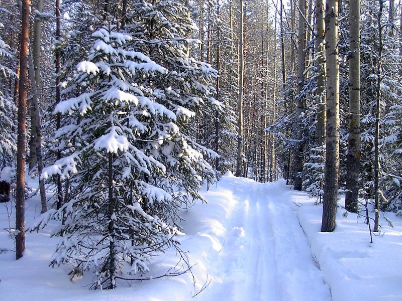 Русский Север - парк в Вологодской области зимой.